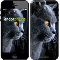 Чехол для iPhone 5s Красивый кот 3038c-21