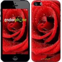 Чехол для iPhone 5s Красная роза 529c-21