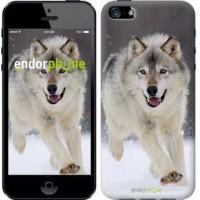 Чехол для iPhone 5 Бегущий волк 826c-18