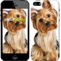 Чехол для iPhone 5 Йоркширский терьер с хвостиком 930c-18