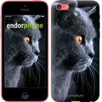Чехол для iPhone 5c Красивый кот 3038c-23