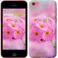 Чехол для iPhone 5c Розовая примула 508c-23