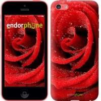 Чехол для iPhone 5c Красная роза 529c-23