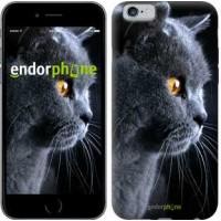 Чехол для iPhone 6 Красивый кот 3038c-45