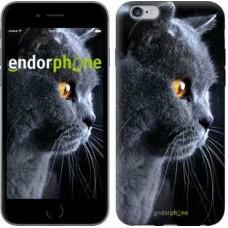 Чехол для iPhone 6s Plus Красивый кот 3038c-91