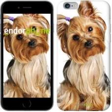 Чехол для iPhone 6s Plus Йоркширский терьер с хвостиком 930c-91