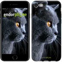 Чехол для iPhone 7 Красивый кот 3038c-336