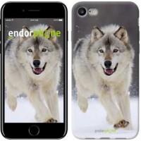 Чехол для iPhone 7 Бегущий волк 826c-336