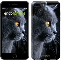 Чехол для iPhone 7 Plus Красивый кот 3038c-337