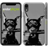 Чехол для iPhone XR Доберман 2745c-1560