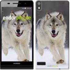 Чехол для Huawei Ascend P6 Бегущий волк 826c-39