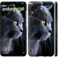 Чехол для Huawei P Smart 2019 Красивый кот 3038m-1634