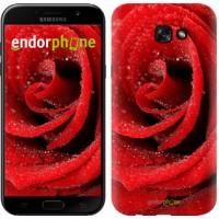 Чехол для Samsung Galaxy A7 (2017) Красная роза 529m-445