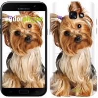 Чехол для Samsung Galaxy A7 (2017) Йоркширский терьер с хвостиком 930m-445