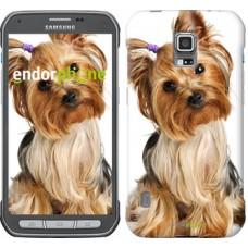 Чехол для Samsung Galaxy S5 Active G870 Йоркширский терьер с хвостиком 930u-364