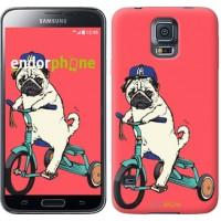 Чехол для Samsung Galaxy S5 Duos SM G900FD Мопс на велосипеде 3072c-62