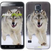 Чехол для Samsung Galaxy S5 Duos SM G900FD Бегущий волк 826c-62