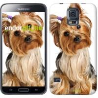 Чехол для Samsung Galaxy S5 Duos SM G900FD Йоркширский терьер с хвостиком 930c-62