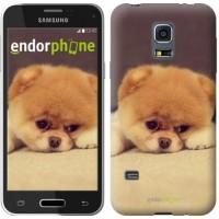 Чехол для Samsung Galaxy S5 mini G800H Boo 2 890m-44