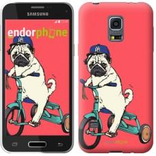 Чехол для Samsung Galaxy S5 mini G800H Мопс на велосипеде 3072m-44
