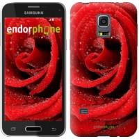 Чехол для Samsung Galaxy S5 mini G800H Красная роза 529m-44