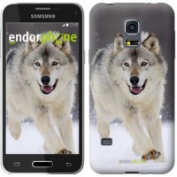Чехол для Samsung Galaxy S5 mini G800H Бегущий волк 826m-44