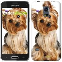 Чехол для Samsung Galaxy S5 mini G800H Йоркширский терьер с хвостиком 930m-44