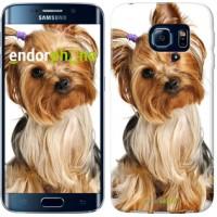 Чехол для Samsung Galaxy S6 Edge G925F Йоркширский терьер с хвостиком 930c-83