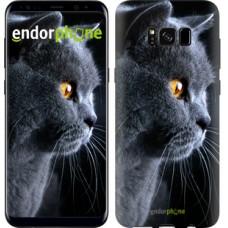 Чехол для Samsung Galaxy S8 Красивый кот 3038c-829