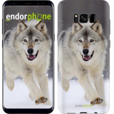 Чехол для Samsung Galaxy S8 Бегущий волк 826c-829
