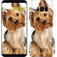 Чехол для Samsung Galaxy S8 Йоркширский терьер с хвостиком 930c-829